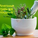 Как мочегонные травы помогают похудеть?