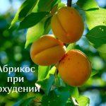 Можно ли есть абрикосы при похудении?