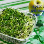 Кресс-салат - свойства и польза при похудении